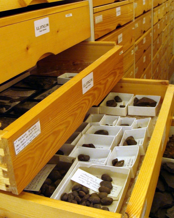 Fossil bivalves