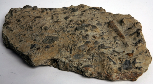 Fossil sea bed
