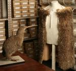 Kiwi cloak